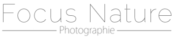 Professional Photo Labs